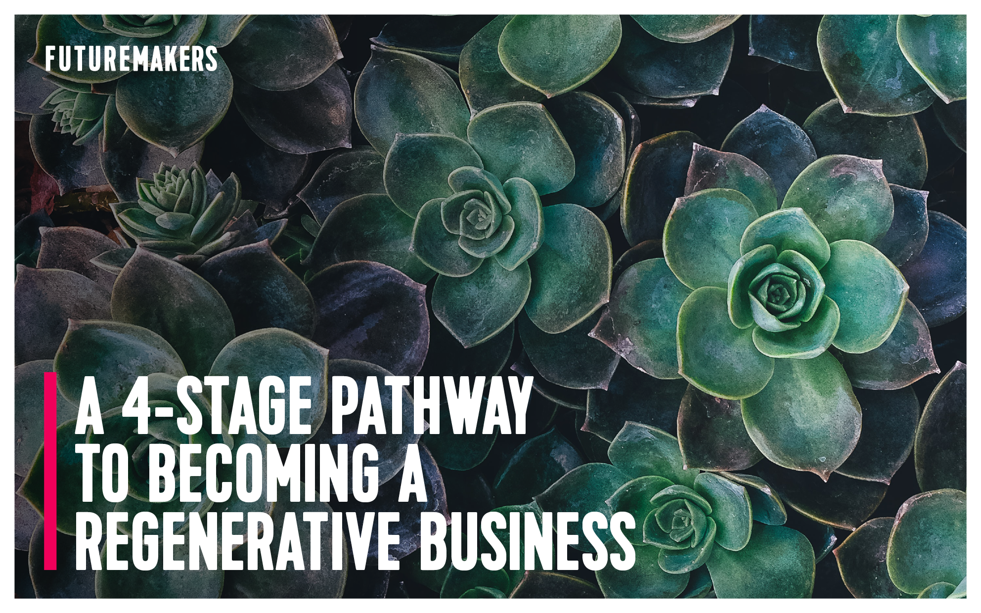 futuremakers-a-4-stage-pathway-to-becoming-a-regenerative-business