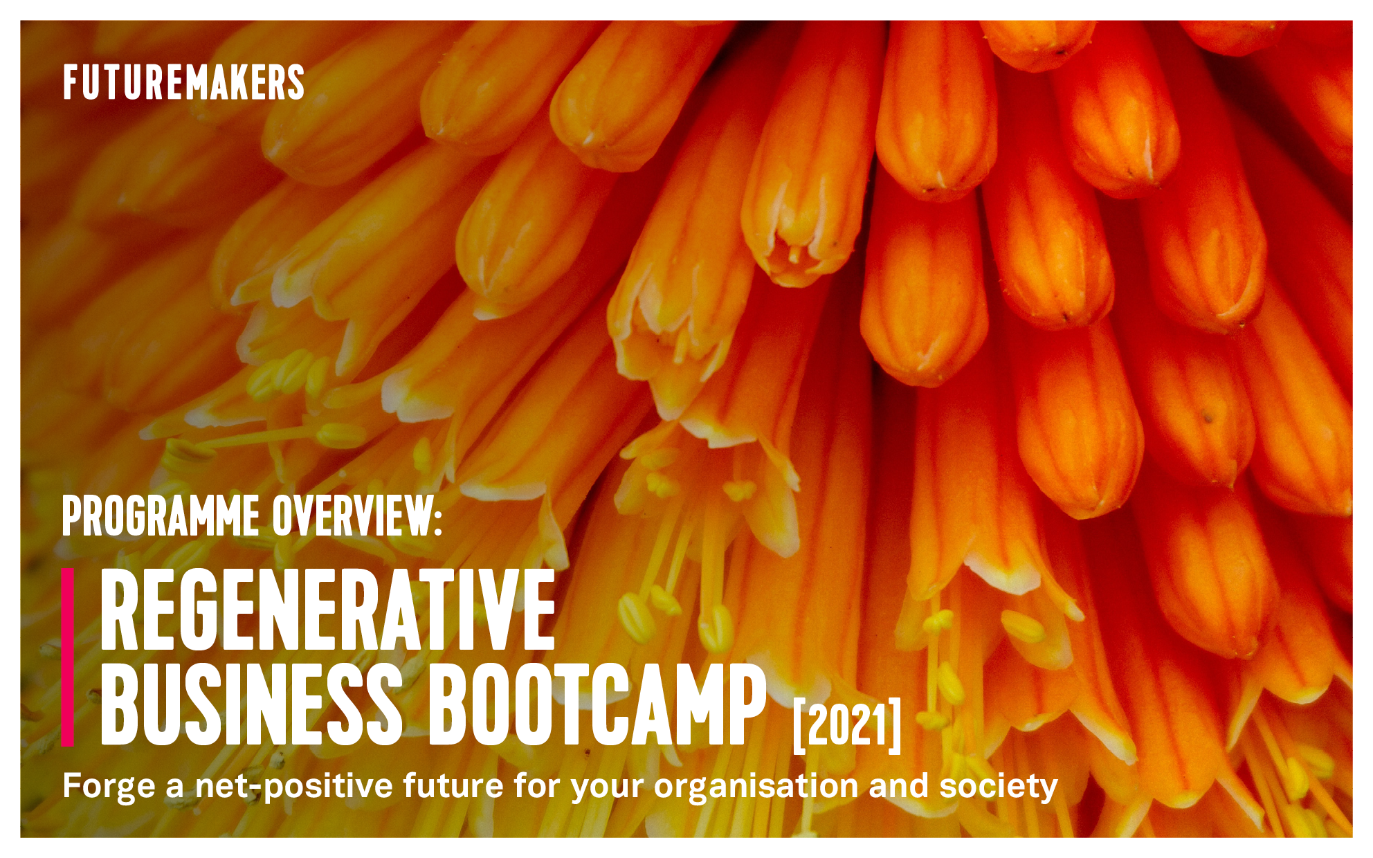 regenerative-business-bootcamp-programme-overview-cross-sector