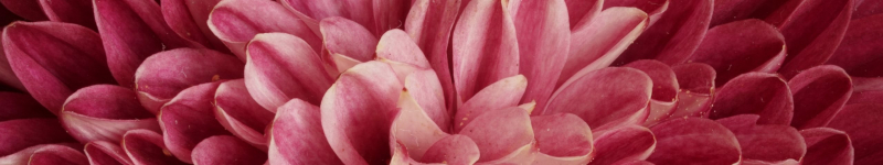 medium-nature-pink-flower