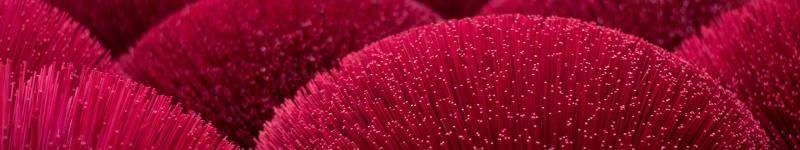 medium-nature-red-anenomes