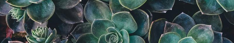 medium-nature-succulents